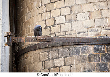 City Pigeon - A pigeon perches on a rusted out piece of...