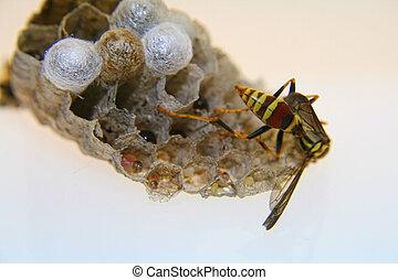 Bee in Nest