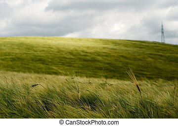 Wind over wheat field - Wind over golden wheat field under...
