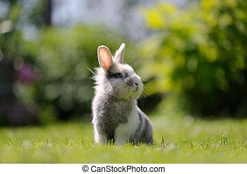 Cute Fluffy Rabbit Outdoors on Green Grass - A cute fluffy...
