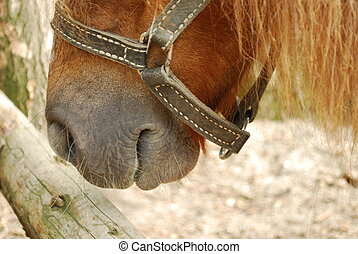 Horse Mouth Close Up