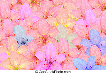 Multicolored Lily Flowers - Beautiful multicolored lily...