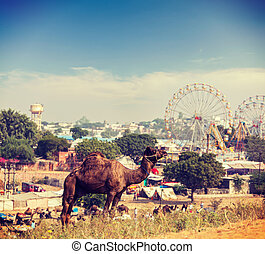 Camels at Pushkar Mela (Pushkar Camel Fair), India - Vintage...