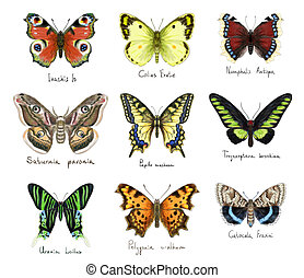 Butterflys Watercolor imitation - Butterflys set Watercolor...