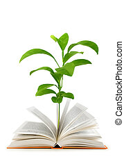 Book and plant on white