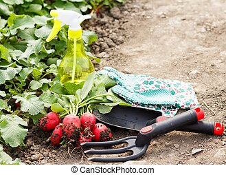 Gardening Works - A bunch of gardening tools and radish...