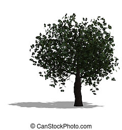 chestnur tree - rendering of a tree with shadow and lipping...