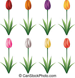 Tulip - Illustration of a tulip with stem and leaves in...