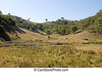 Rural Scene - A rural scene, near Mudgee, New South Wales,...