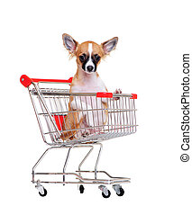 chihuahua in a  shopping trolley