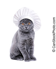 british cat wearing chef hat