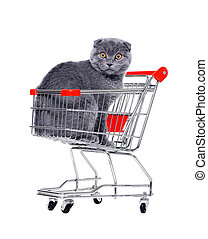 cat in a  shopping trolley