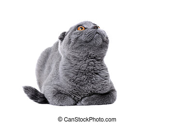 front view of cat looking up