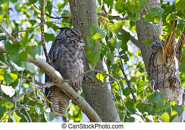 Great Horned Owl Perched on a Branch in a Tree