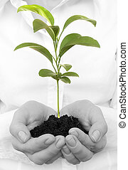 Young plant in human hands on light background