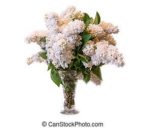 white common lilac (syringa) in vase isolated on white...