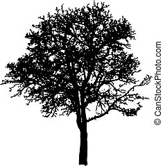 Deciduous Tree - Deciduous tree Black silhouette on white...