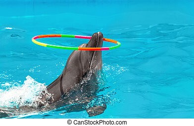 Glad beautiful dolphin in blue water in the swimming pool on a bright sunny day twist Gymnastic circle on his nose on the representation