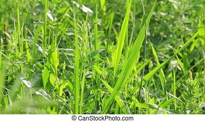 Closeup tilt shot of green vibrant grass in summer