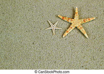 Starfish in the beach sand with copy space, postcard concept