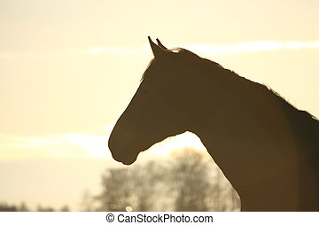 Silhouette of horse in sunset
