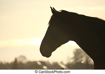 Silhouette of horse in sunset - Silhouette of horse head in...