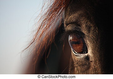 Close up of brown horse eye - Close up of beautiful brown...
