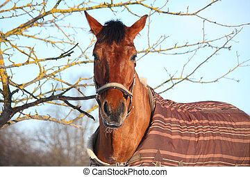 Portrait of brown horse in winter at the paddock