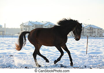 Silhoette of horse galloping free in winter