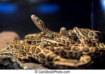 Large pack of young snakes closeup photo