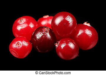 Cranberry on Black Background - A close-up of red...