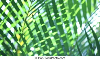 Green leaf in nature - Close up of a Green leaf in nature