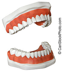 Medical Dentures - New medical Dentures isolated on a white...