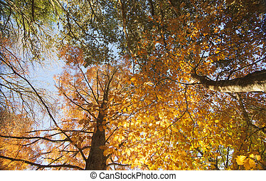 Autumn colors, looking through the backlit trees