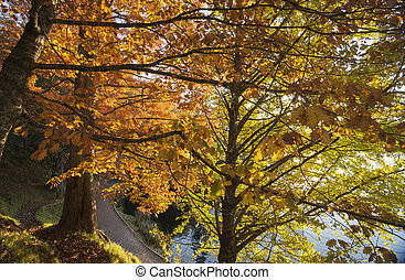 Autumn colors, looking through the backlit trees.