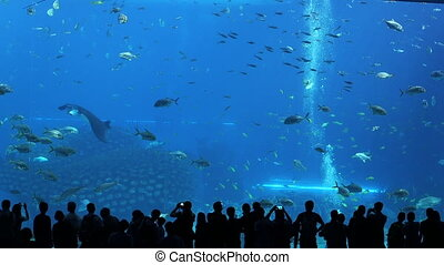 oceanarium - people and fish tank.