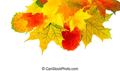 colored autumn leaves isolated on a white background - multi...