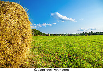 rural landscape with a field and hay - summer rural...