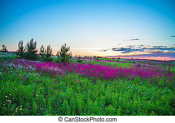 summer sunrise over a blossoming meadow