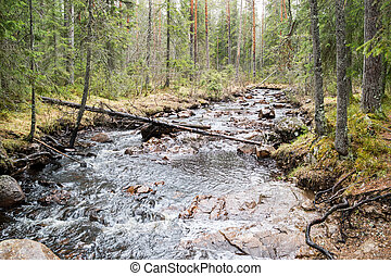 River in forest - A river with fallen wood and lots of...