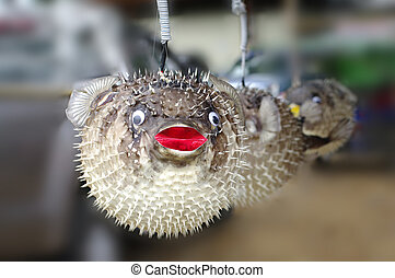 stuffed blowfish selling in market - stuffed blowfishes...