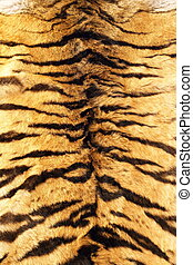 stripes on tiger pelt - black stripes tiger pelt, real fur...