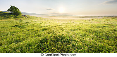 Lane in meadow and sunrise Nature design