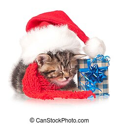 Asleep kitten - Asleep little kitten with New Year's...