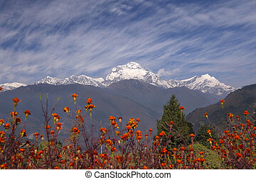 Himalayas. Nepal - View at the Annapurna Himalaya Range,...
