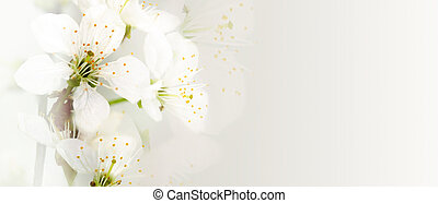 apricot flowers on a light background
