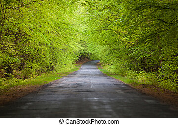 estrada, árvore, túnel