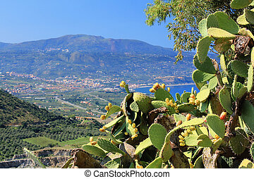 Cactus - Ripe Prickly pair cactus and fruit against a blue...