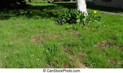 leg cut grass flower