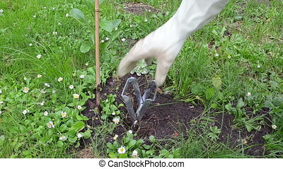 gardener mole trap - Gardener man with gloves take out...